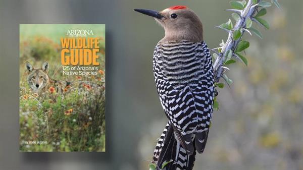Arizona Wildlife Guide