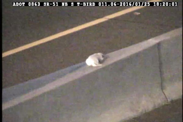 Traffic camera photo of dog SR 51 during heavy evening traffic