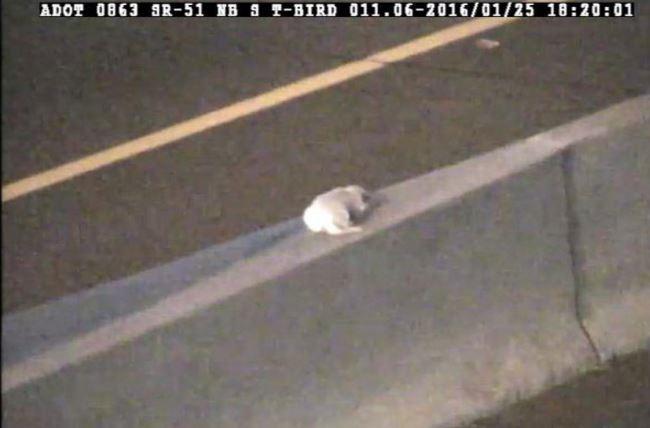 Dottie on the highway median wall