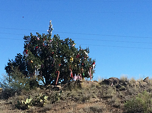 Mysteriously decorated tree on I-17.