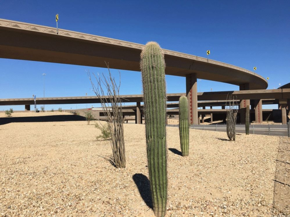 Loop 303 and I-10 Landscaping