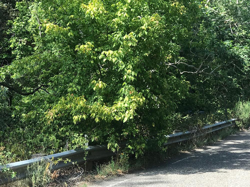 Hazard Tree Example 2
