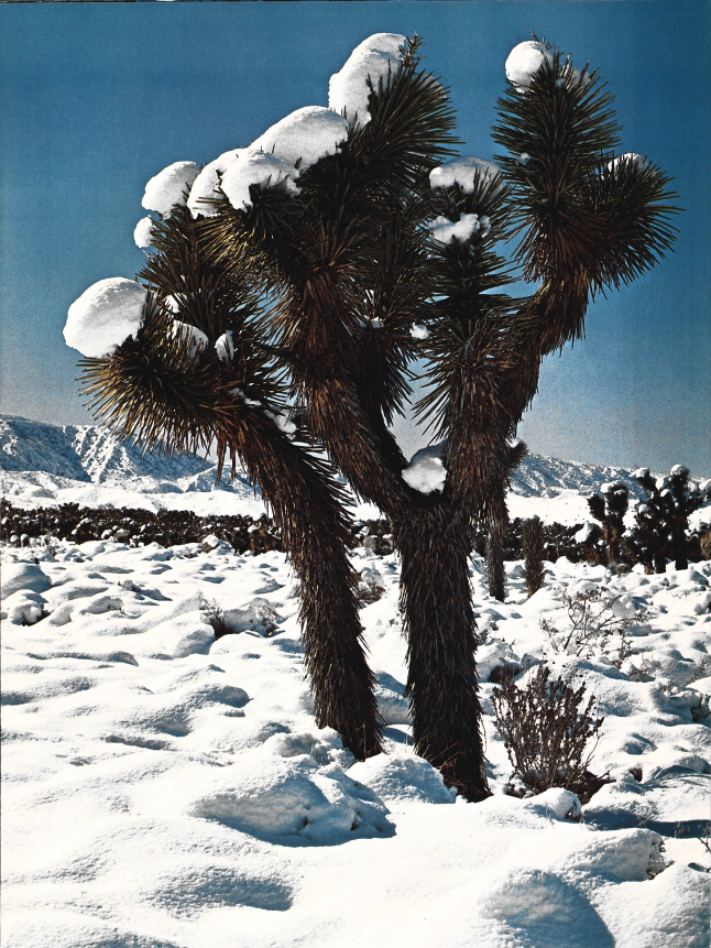 Mohave Desert Winter by Pete Essick