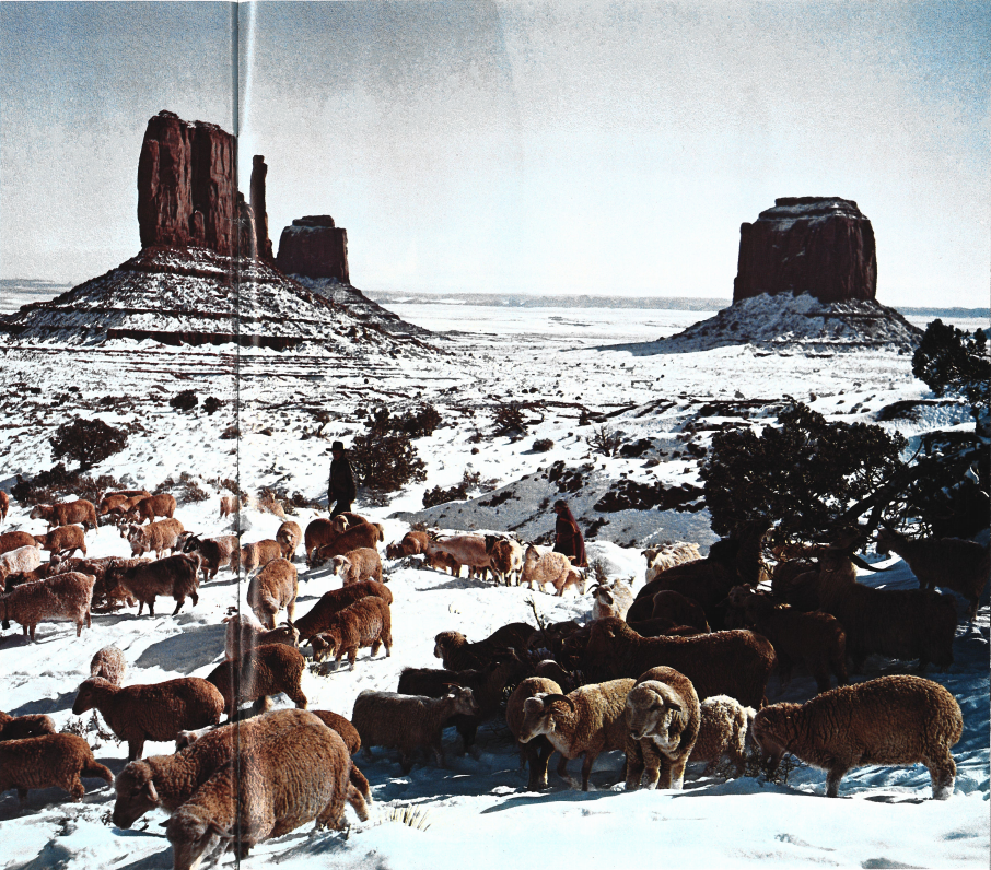 Sheep in Monument Valley by Bob Bradshaw