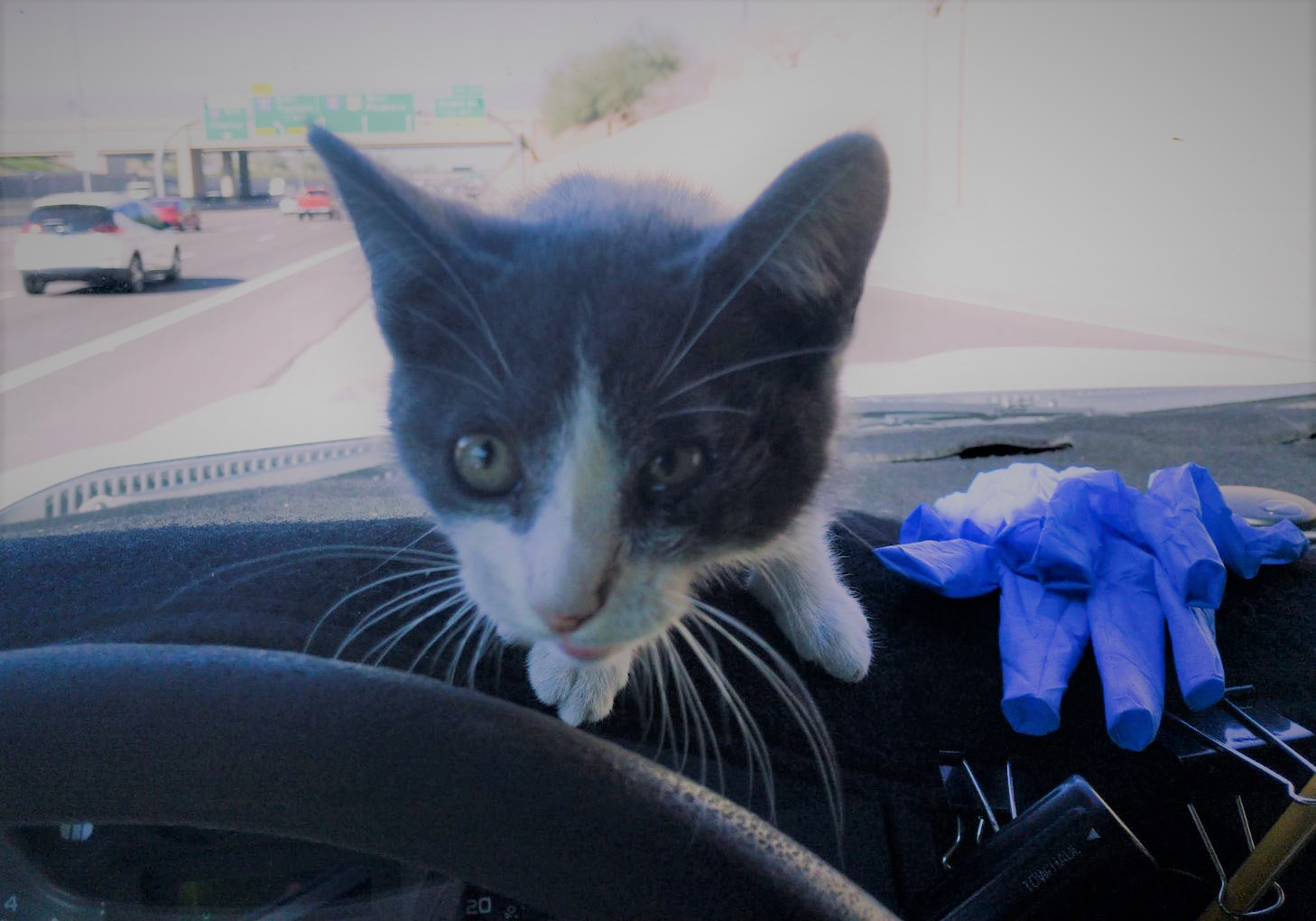 Millie finds new life thanks to ADOT