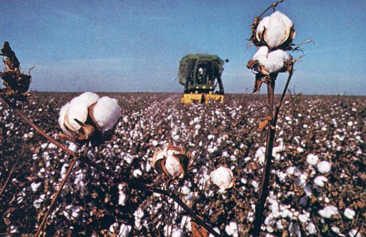 AZ Highways cotton crop
