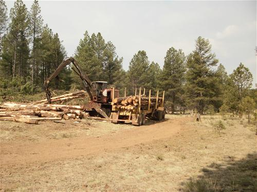 Loggers removing trees