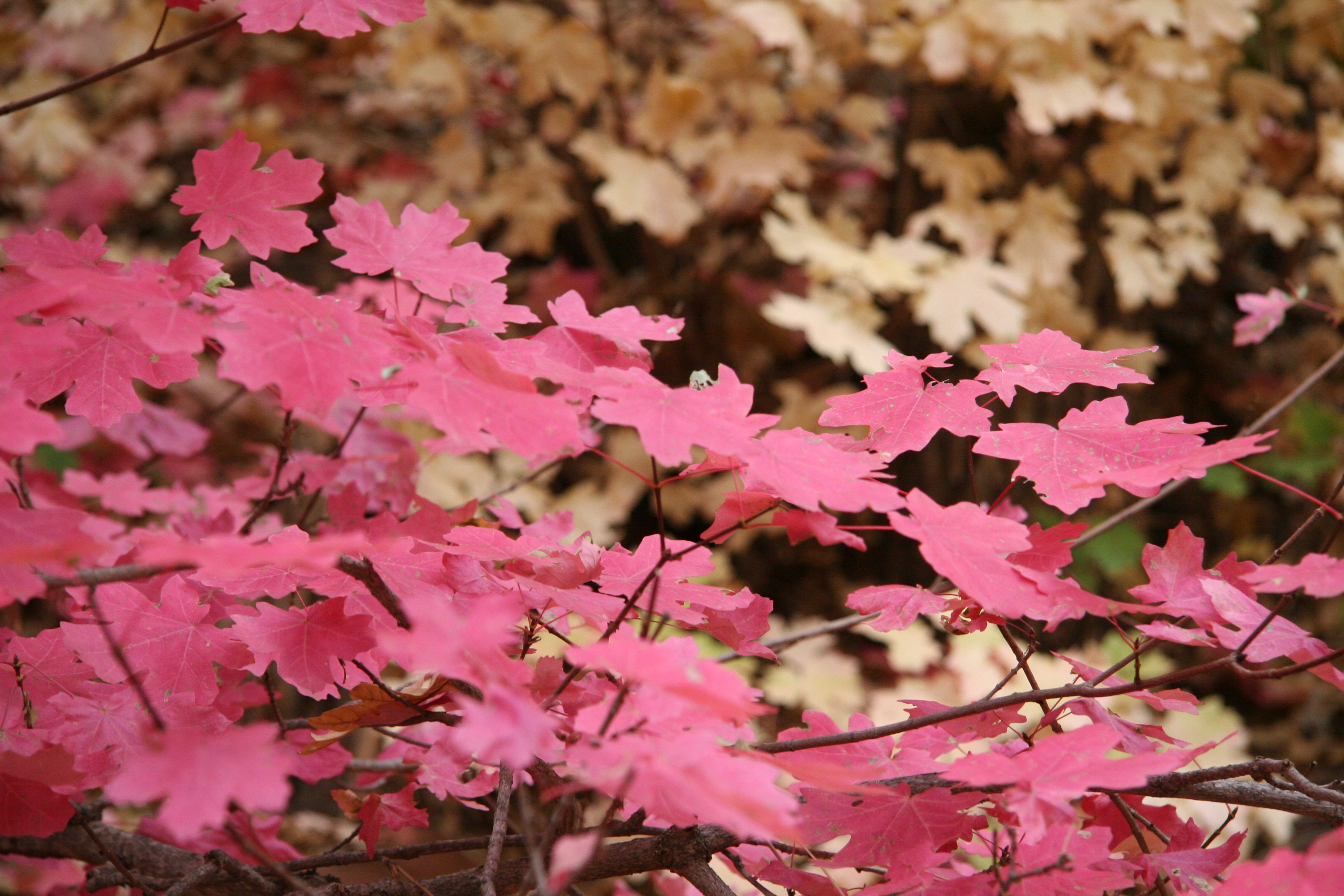 Fall leaves near Payson