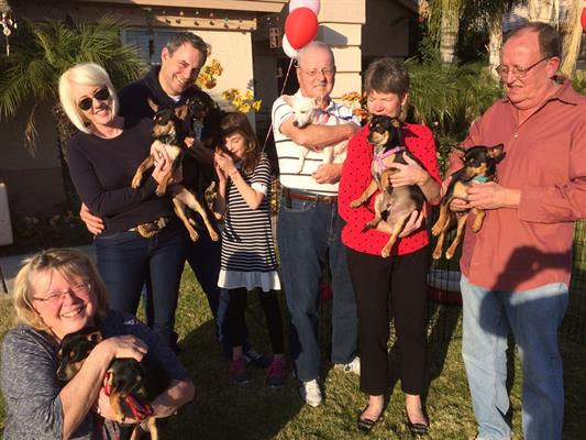 A year after being found on the freeway, this is Dottie's (white chiquaqua) new family.