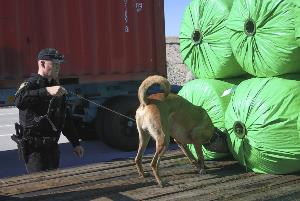 K-9 and Officer inspect tractor trailer cargo at Ehrenberg Port of Entry.