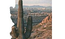 Part of a Crash Facts Report Cover with a cactus, mountain and Phoenix skyline shown in an Arizona shape