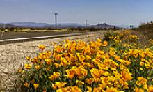 Wildflowers along side the highway