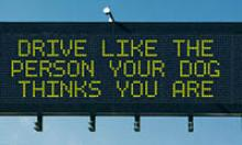 Dynamic Message Sign: Drive like the person your dog thinks you are.