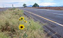 lonely stretch of road with yellow wildflowers on the shoulder.