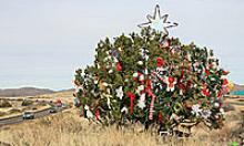 Tree in the median of I-17 is mysteriously decorated for Christmas.