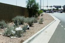 Trash on the side of the freeway