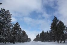 Snowy forest road near Flagstaff, AZ